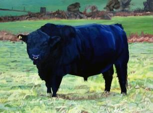 Black Bull In Beausang's Field