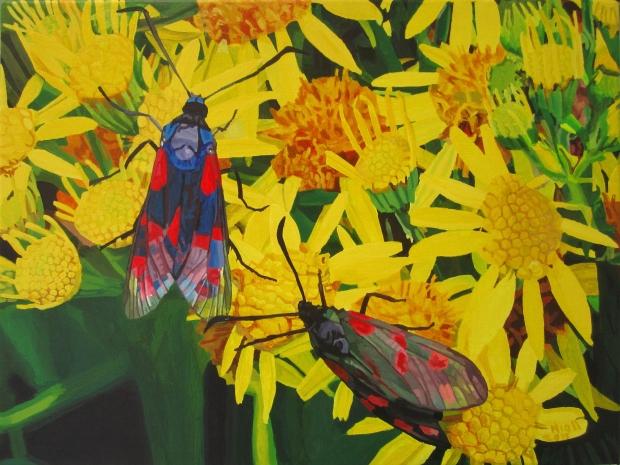 Two Cinnibar Moths on Ragwort Flowers