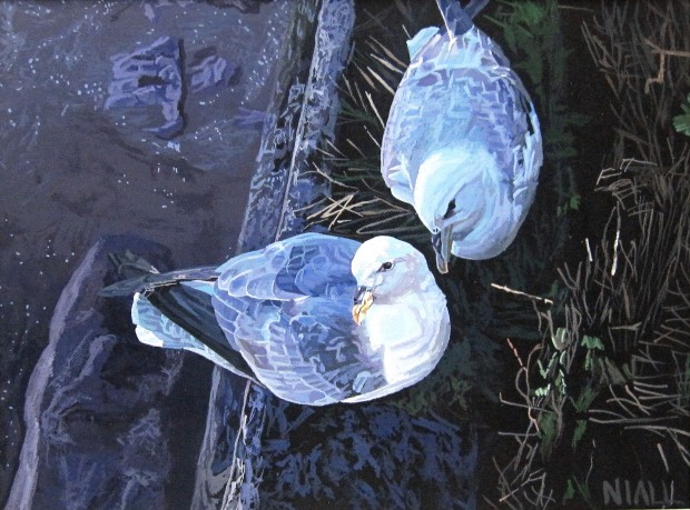 Two Fulmars Near Youghal Lighthouse