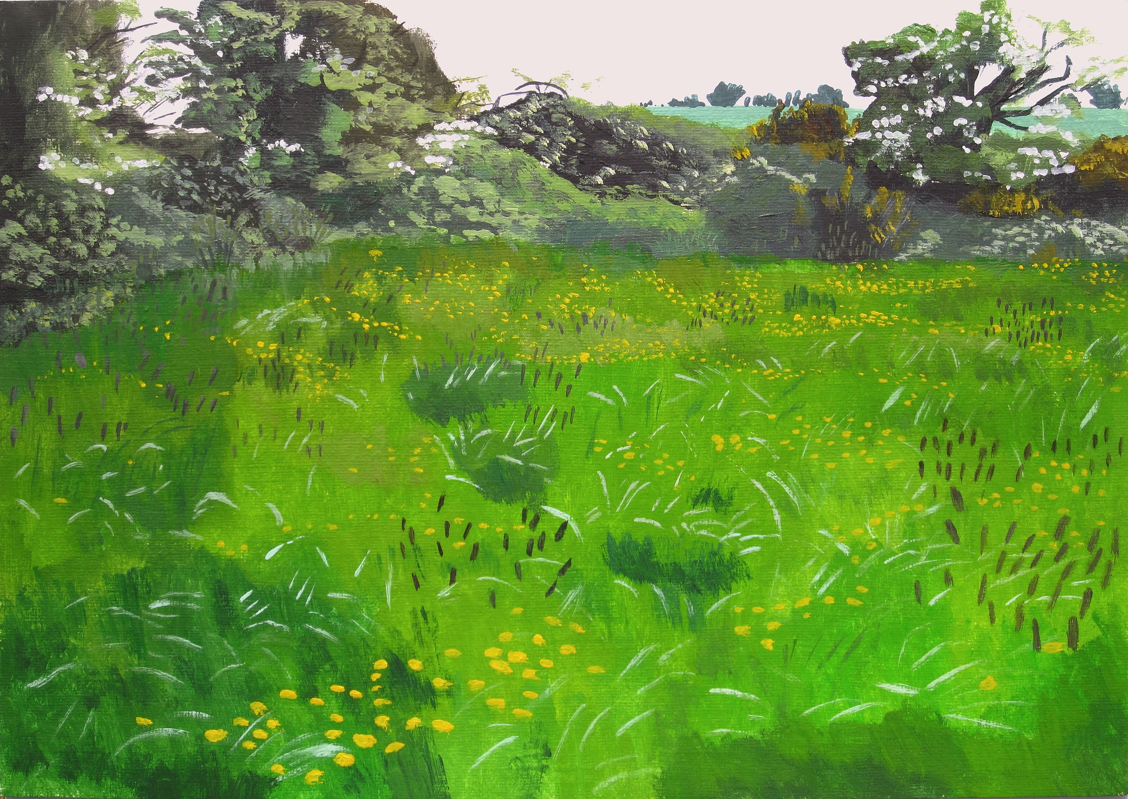 Buttercups In A Field In Rathhaha
