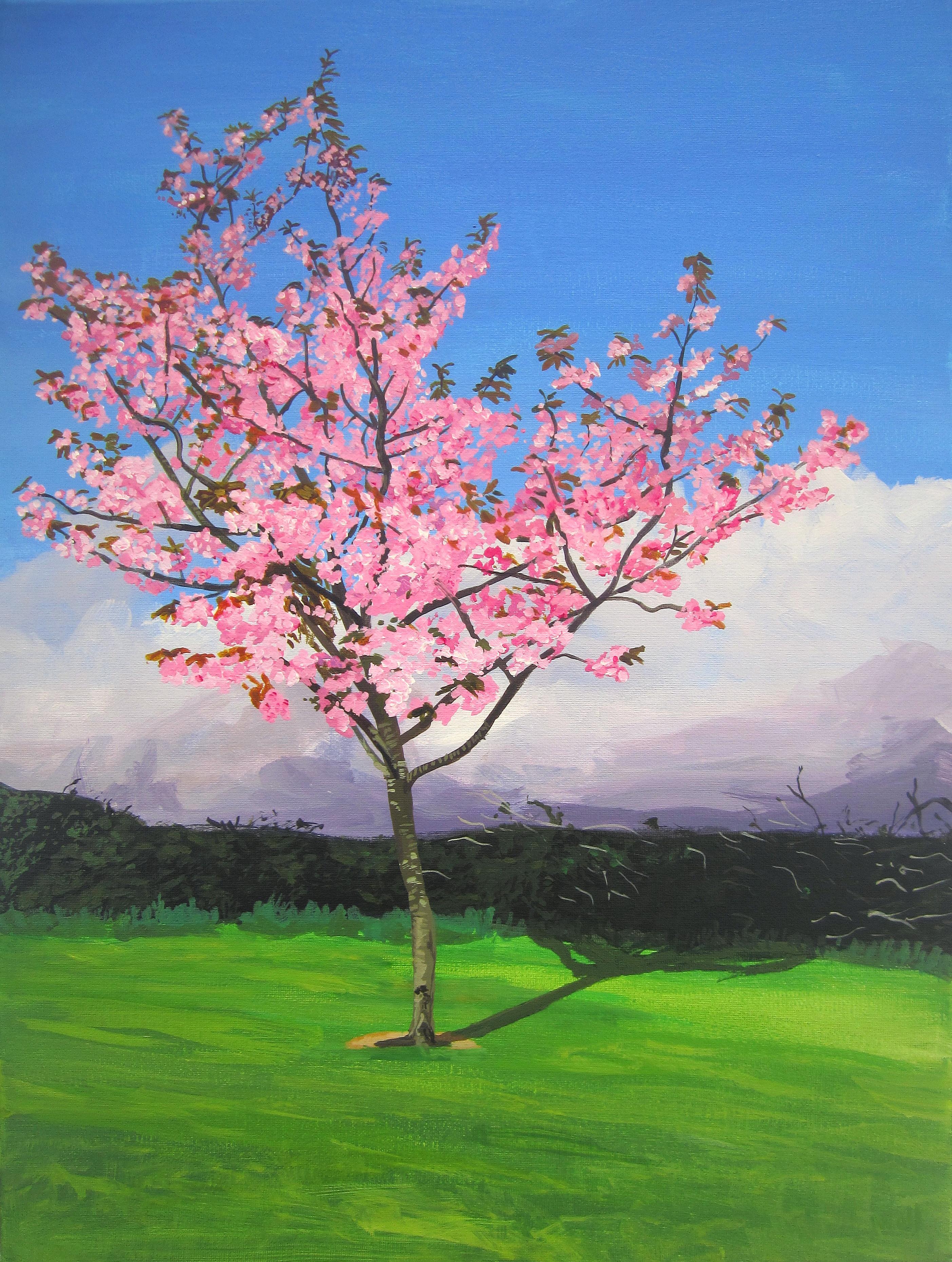 Pink Cherry Blossom Near Midleton