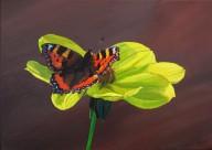 Tortoiseshell Butterfly on a Dahlia Flower