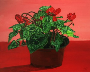 Potted Cyclamen (Red October)