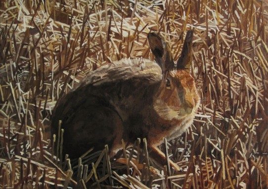 Hare Amongst Corn Stubbles