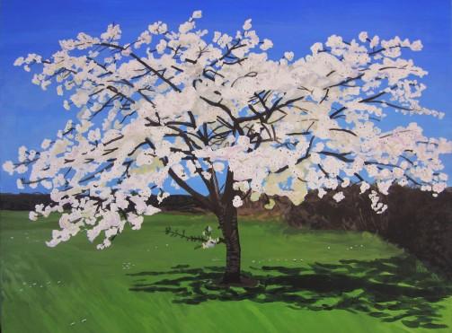 White Cherry Blossom Tree, Spring 2015