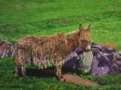 Blasket Island Donkey