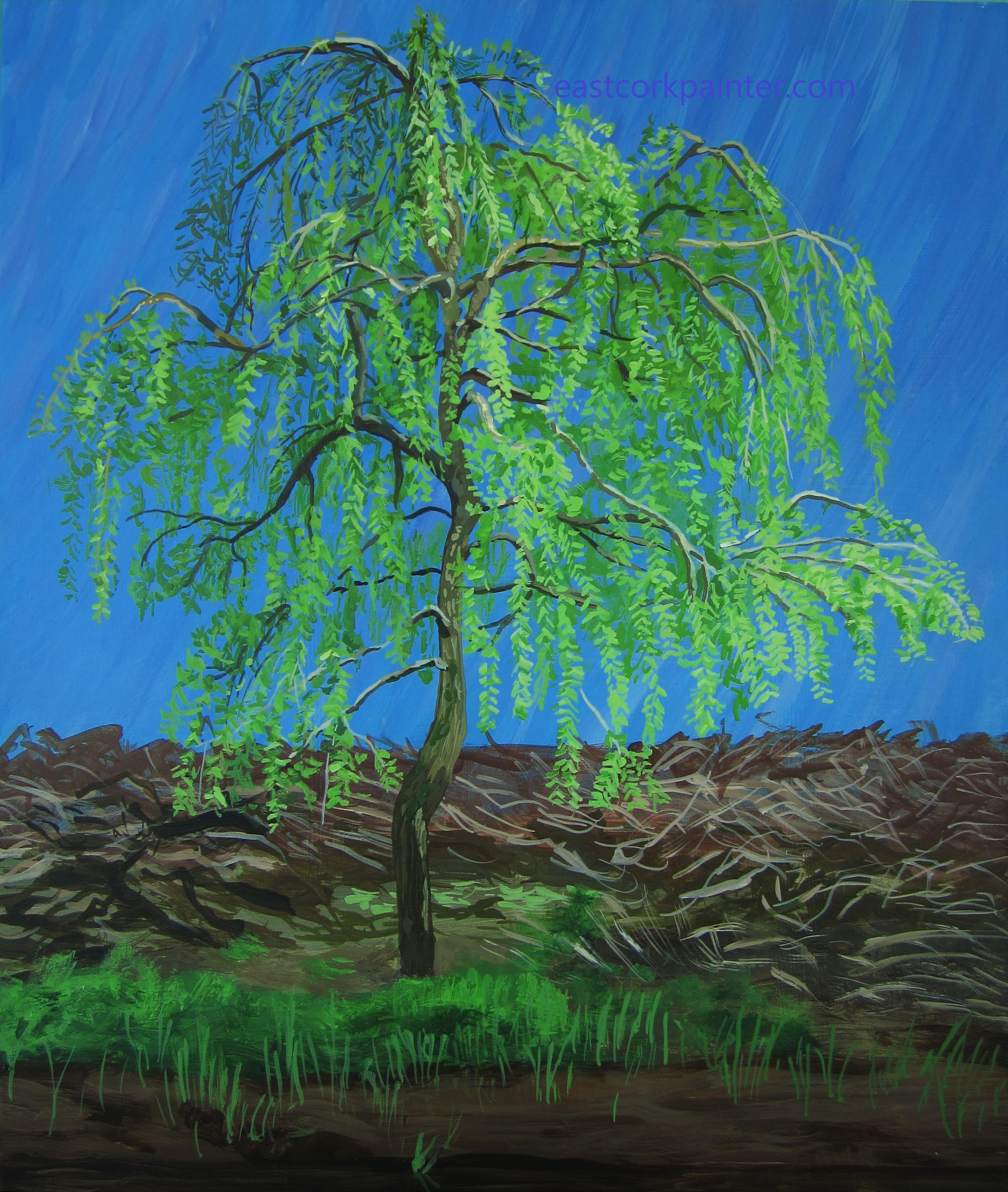 Weeping Willow in Castlemartyr Wood watermark
