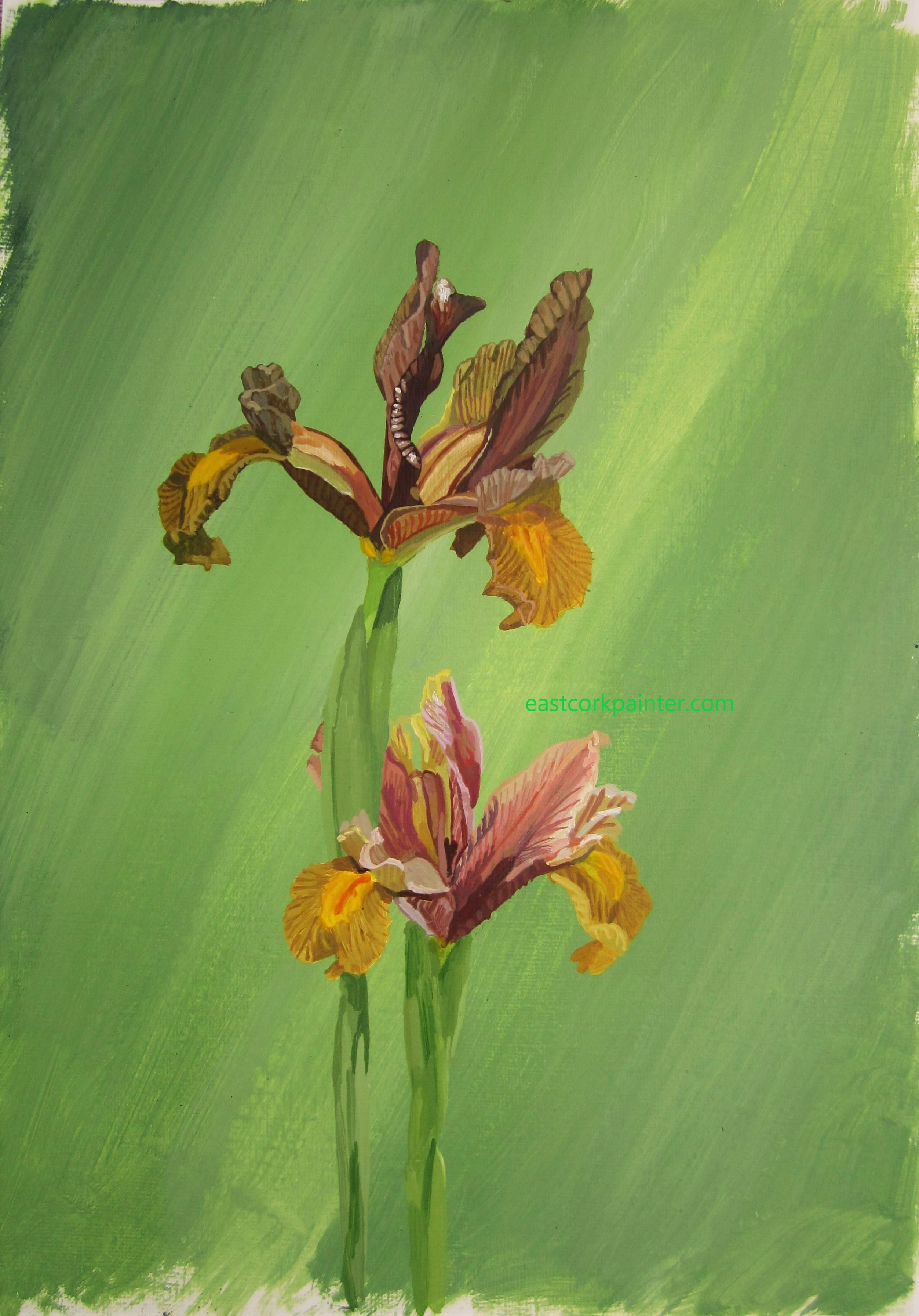 Two Mustard Coloured Irises watermark